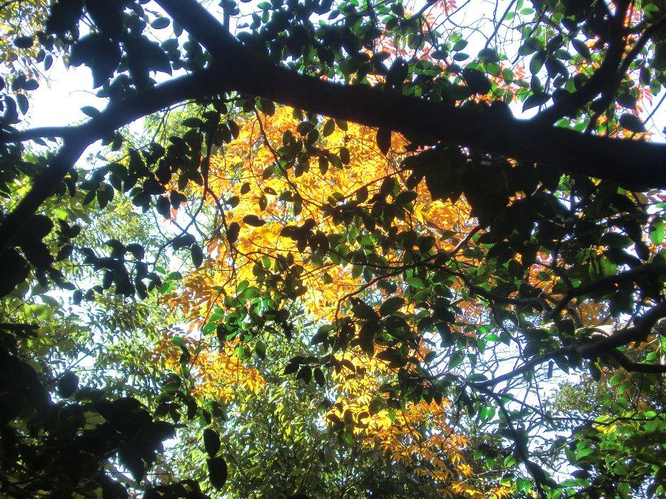紅葉しかけの木々2