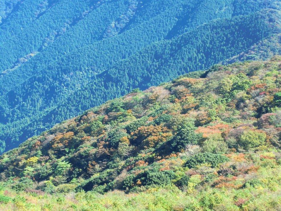 紅葉しかけの木々3