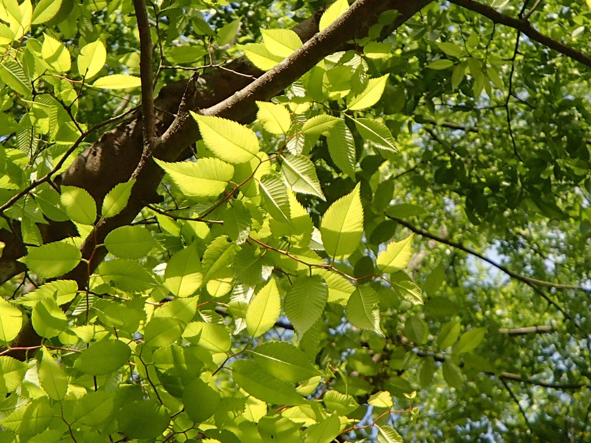 新緑の木々2