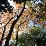 紅葉しかけの木々