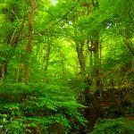 英彦山木々