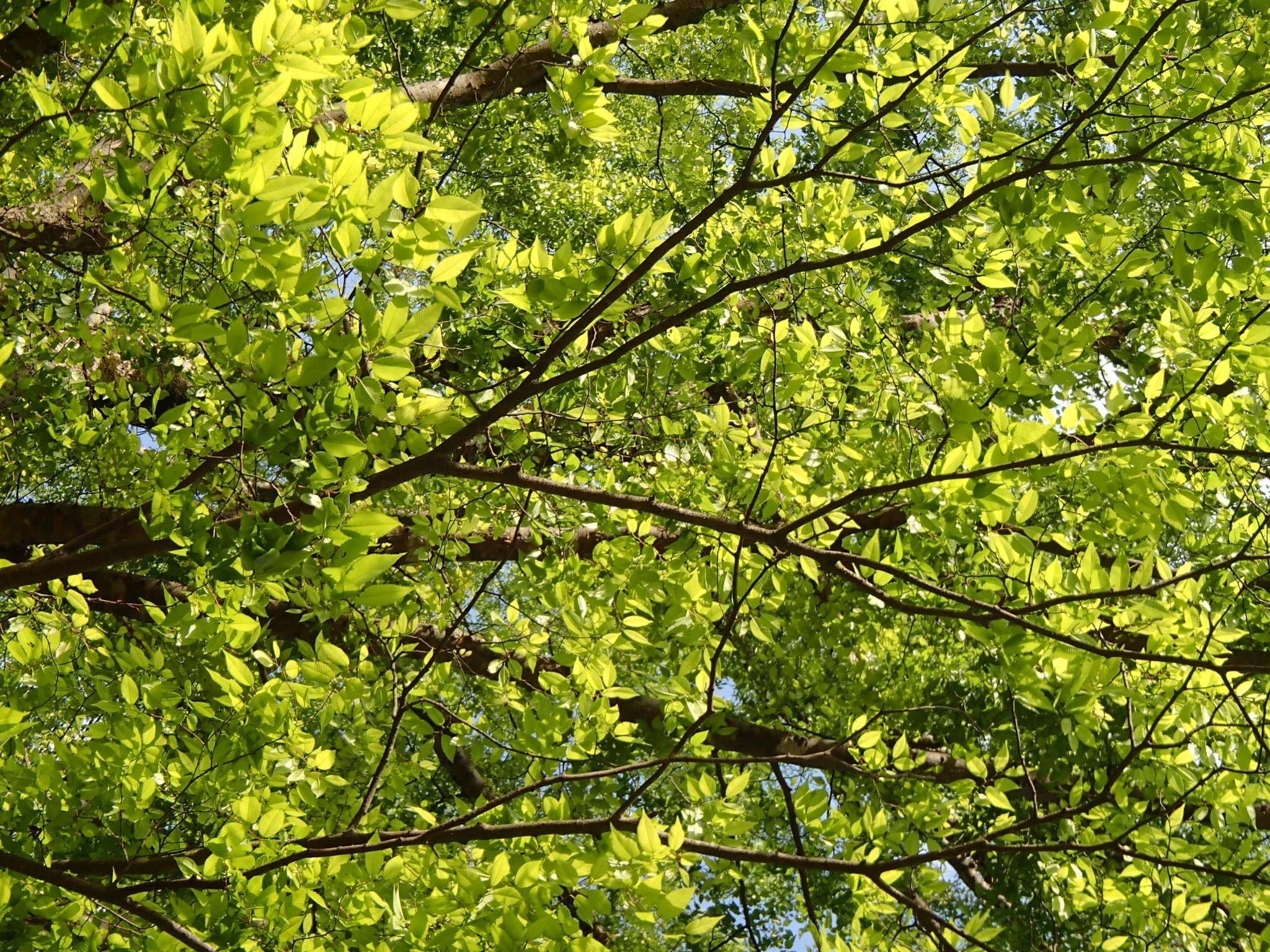 新緑の木々1